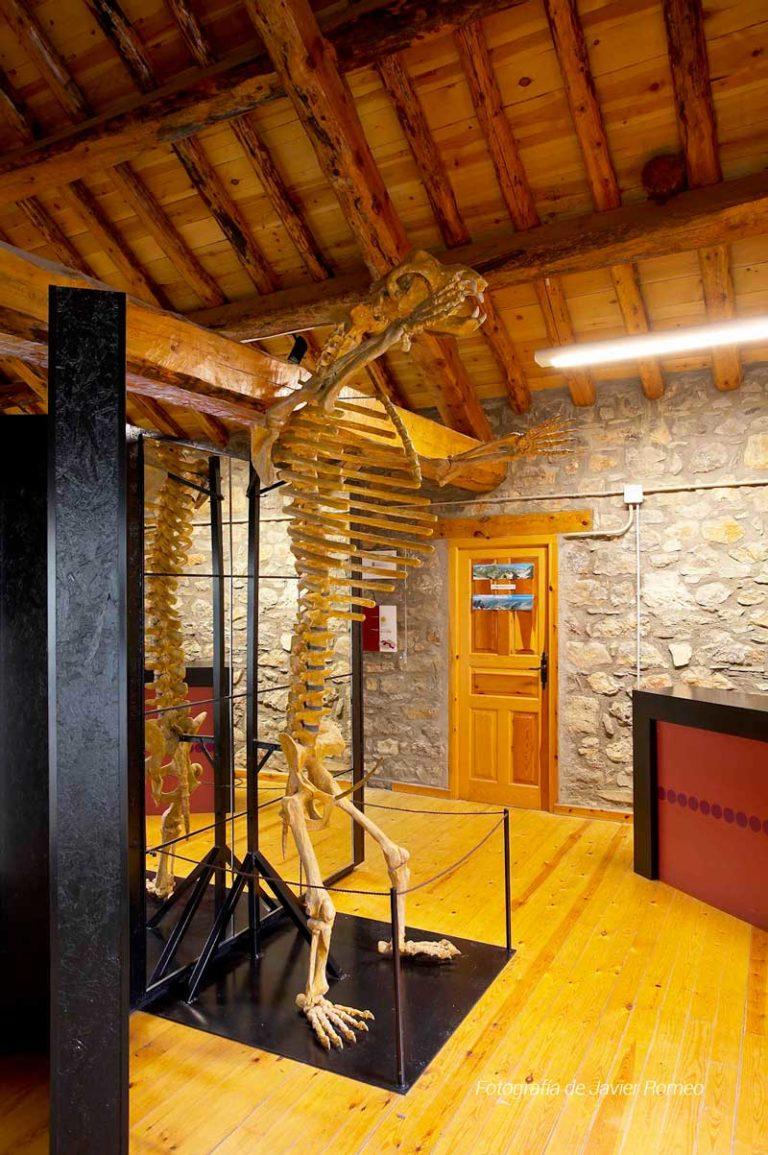 museo-oso-cavernario-2