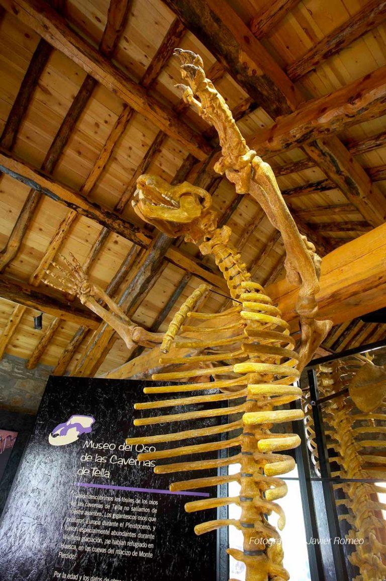 museo-oso-cavernario
