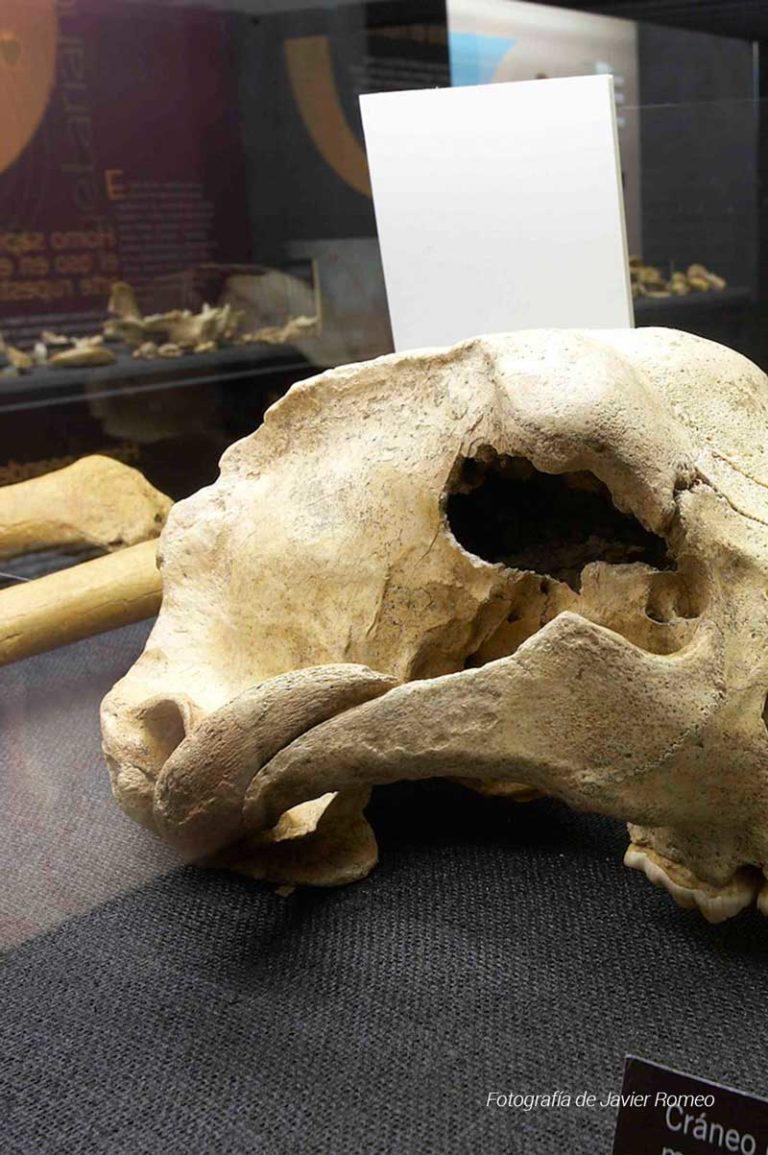 oso-cavernario-1