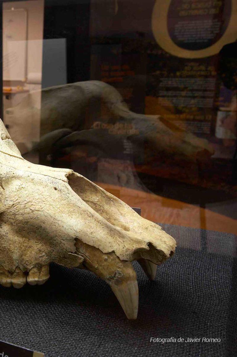 oso-cavernario-2