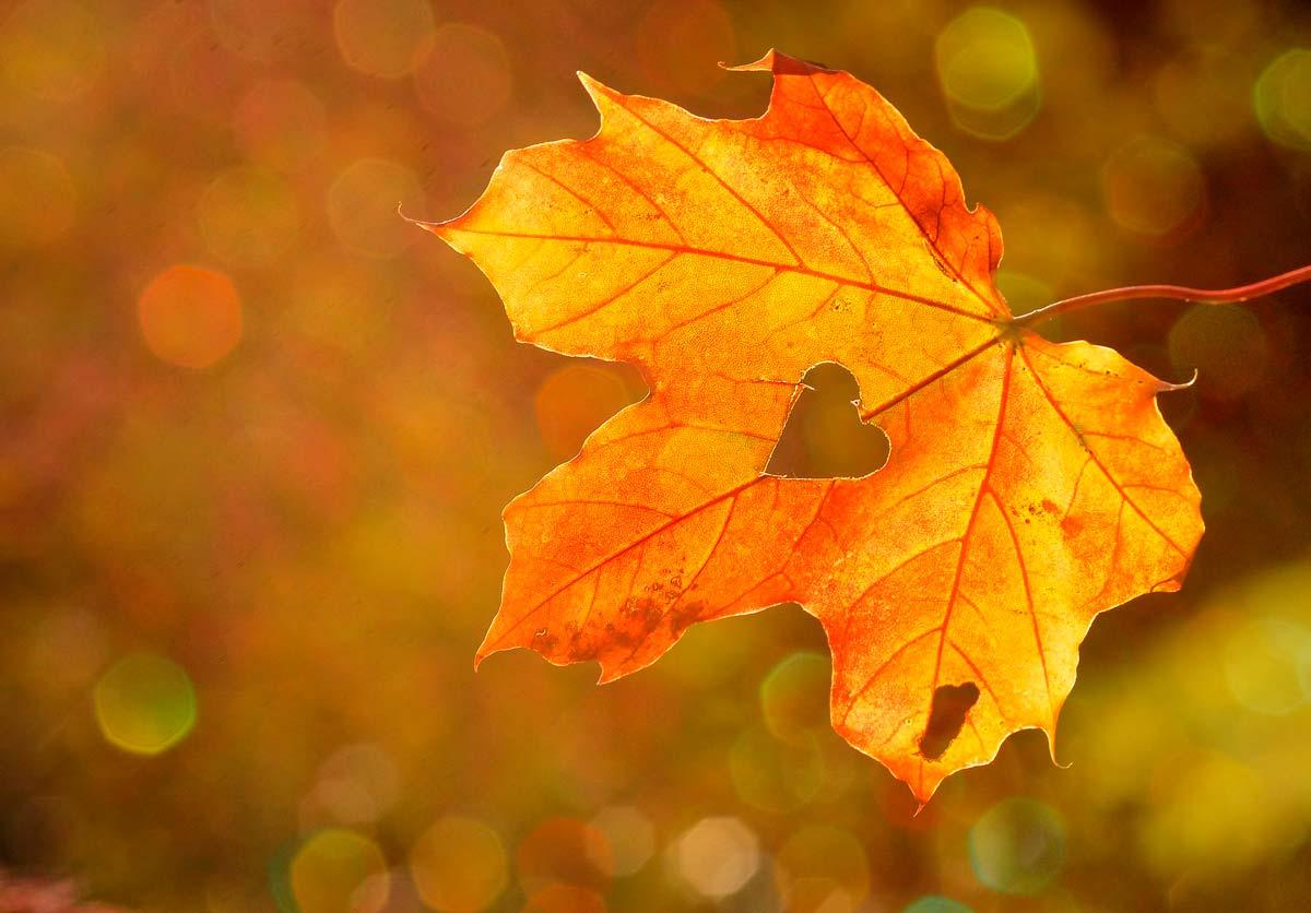 Viva el otoño Love Aragón