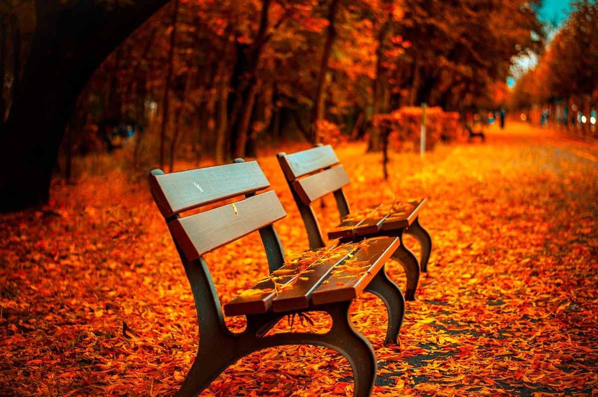 Viva el otoño Love Aragón 3