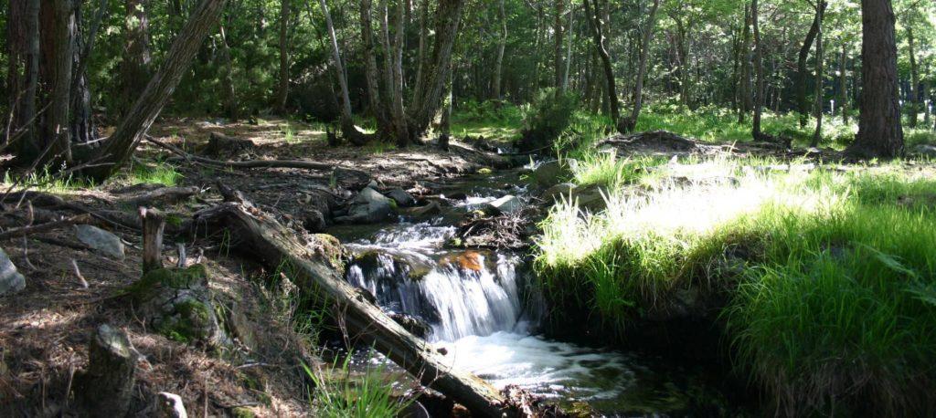 Parque Natural del Moncayo: desde el Santuario de la Virgen del Moncayo al collado Bellido 2