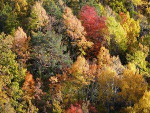 Cinco razones por las que el otoño es una de las mejores temporadas en Aragón