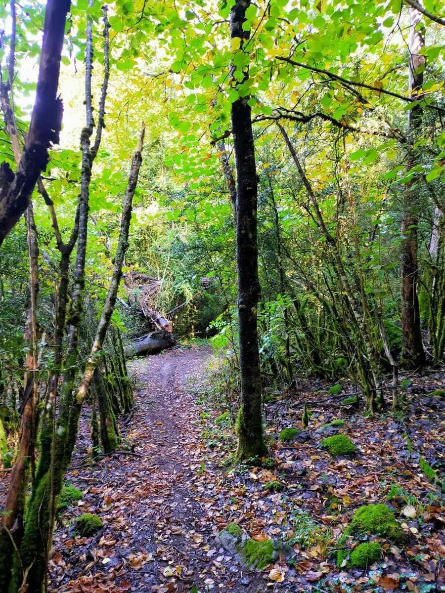 Trail running Valle de Tena, ruta perfecta con niños 8