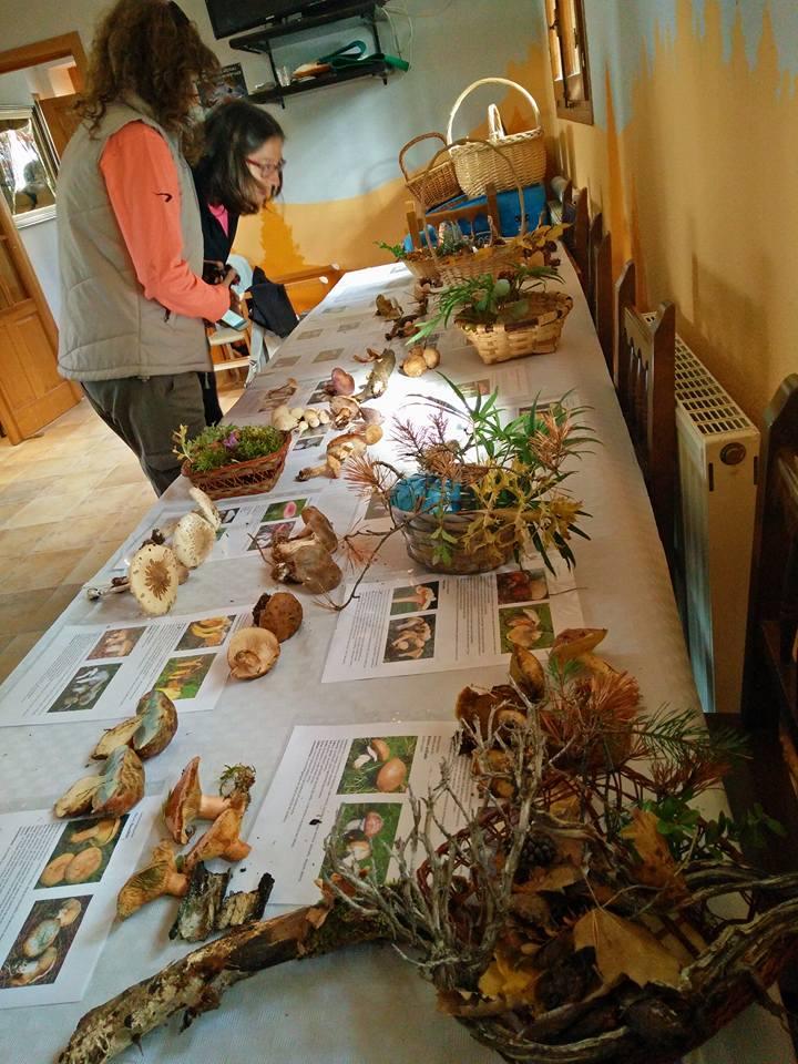 Mejores experiencias Familiares en Aragón 10