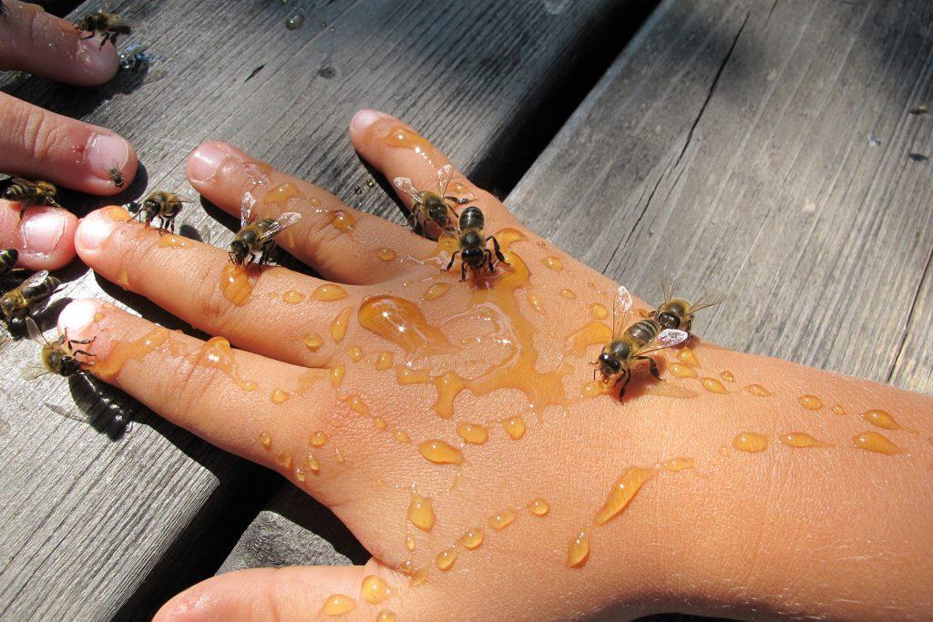 Mejores experiencias Familiares, Mis amigas las abejas